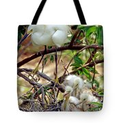 Snowy Egrets Tote Bag