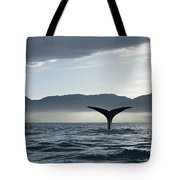 Sperm Whale Physeter Macrocephalus Tote Bag