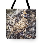 Spinifex Pigeon Tote Bag