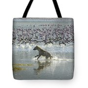 Spotted Hyaena Hunting For Food Tote Bag