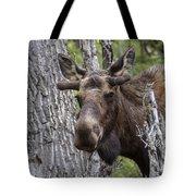 Spring Bull Tote Bag