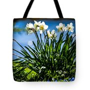 Spring Daffodils. Park Keukenhof Tote Bag by Jenny Rainbow