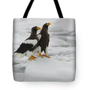 Stellers Sea Eagles Tote Bag