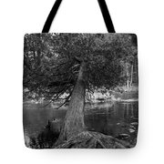Still Hanging On Tote Bag