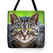 Stray Cat Stare Tote Bag