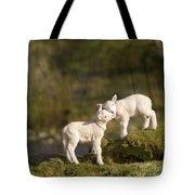 Sweet Little Lambs Tote Bag