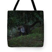Tayra Costa Rica Animals Zoo Habitat Indigenous Population Mixing With Travellers Enjoying And Being Tote Bag