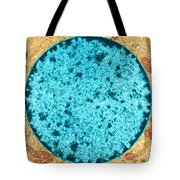 Tem Of Leydig Cell Tote Bag