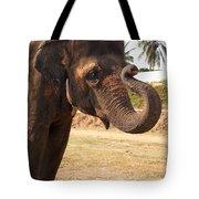 Temple Elephants Maharaja's Palace India Mysore Tote Bag