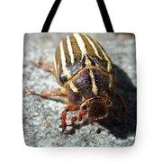 Ten Lined June Beetle Tote Bag