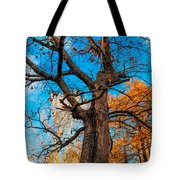 Texture Of The Bark. Old Oak Tree Tote Bag