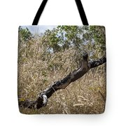 The Death Of A Tree V5 Tote Bag