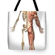 The Human Skeleton And Muscular System Tote Bag