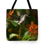 The Hummingbird Hover  Tote Bag