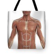The Muscles Of The Torso Tote Bag