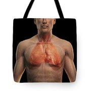 The Respiratory And Cardiovascular Tote Bag