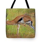 Thomson's Gazelle Tote Bag
