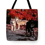 Timber Wolves Under  A Red Maple Tree Tote Bag