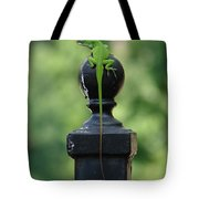 Tip To Tail Tote Bag