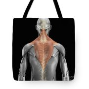 Trapezius Muscle With Skeleton Tote Bag
