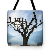 Tree And Bench Tote Bag
