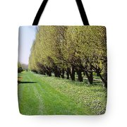 Trees Along A Walkway In A Botanical Tote Bag