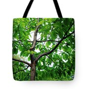 Trees In A Park, Adams Park, Wheaton Tote Bag