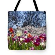 Tulips At Dallas Arboretum V94 Tote Bag