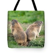 Two Marmots Tote Bag