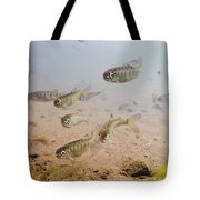 Underwater View Of Coho Salmon Tote Bag