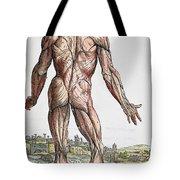Vesalius: Muscles, 1543 Tote Bag