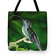 Violet Sabre-wing Hummingbird Tote Bag by Michael and Patricia Fogden