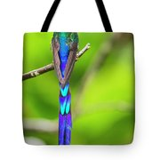 Violet-tailed Sylph Tote Bag