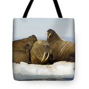 Walruses Resting On Ice Floe Tote Bag