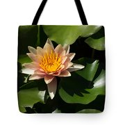 Exotic Colors - A Soft Coral Waterlily Tote Bag
