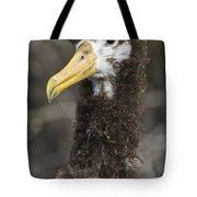 Waved Albatross Molting Juvenile Tote Bag