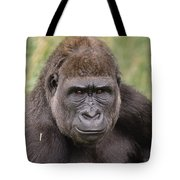 Western Lowland Gorilla Young Male Tote Bag