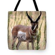 Where The Antelope Play Tote Bag