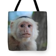 White Face Monkey  Tote Bag