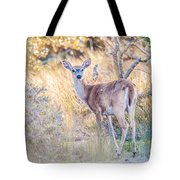 White Tail Deer Bambi In The Wild Tote Bag