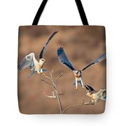 White-tailed Kite Siblings Tote Bag