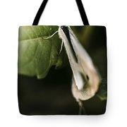 White Winged Moth Insect On A Green Tree Leaf Tote Bag