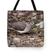 Whitetipped Dove Tote Bag