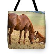 Wild Horse Mother And Foal Tote Bag
