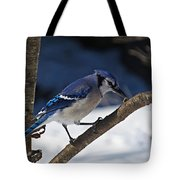 Hungry Winter Blue Jay Tote Bag