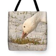 Wintering Snow Goose Tote Bag