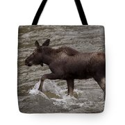Yearling Moose In The Shoshone River   #1289 Tote Bag