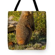 Yellow Bellied Marmot On Alert In  Rocky Mountain National Park Tote Bag