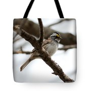 Yellow Crowned Sparrow Tote Bag