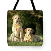 Yellow Labrador Retrievers Tote Bag